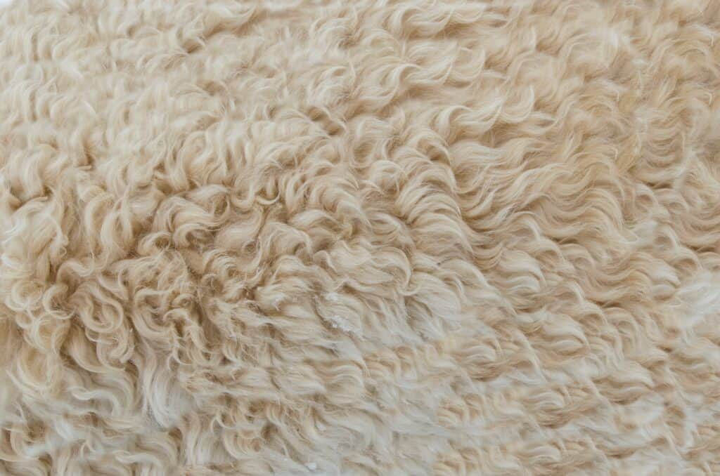 Close up of a clean faux sheepskin rug