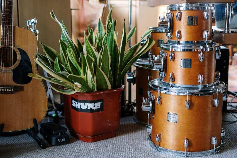 Disassembled drum set beside a potted plant and guitar
